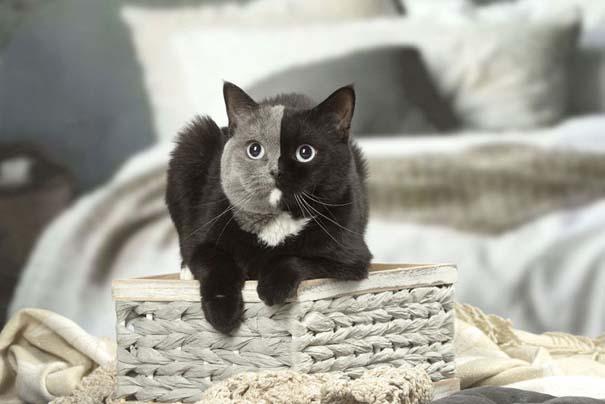 Σπάνιο γατάκι που γεννήθηκε με δύο πρόσωπα, εξελίχθηκε σε μια πανέμορφη γάτα (8)