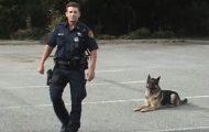Δείτε τι μπορεί να κάνει αυτός ο πανέξυπνος σκύλος της αστυνομίας