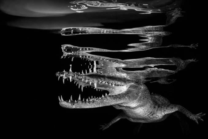 Εντυπωσιακές φωτογραφίες από τον διαγωνισμό UK Underwater Photographer of the Year 2018 (1)