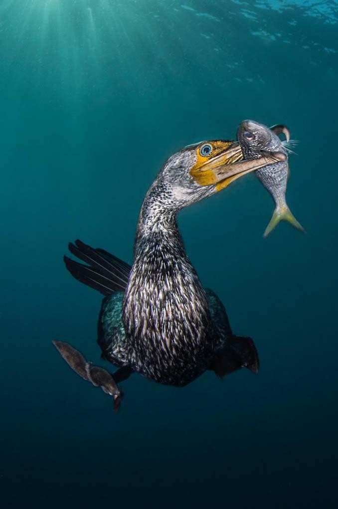 Εντυπωσιακές φωτογραφίες από τον διαγωνισμό UK Underwater Photographer of the Year 2018 (2)