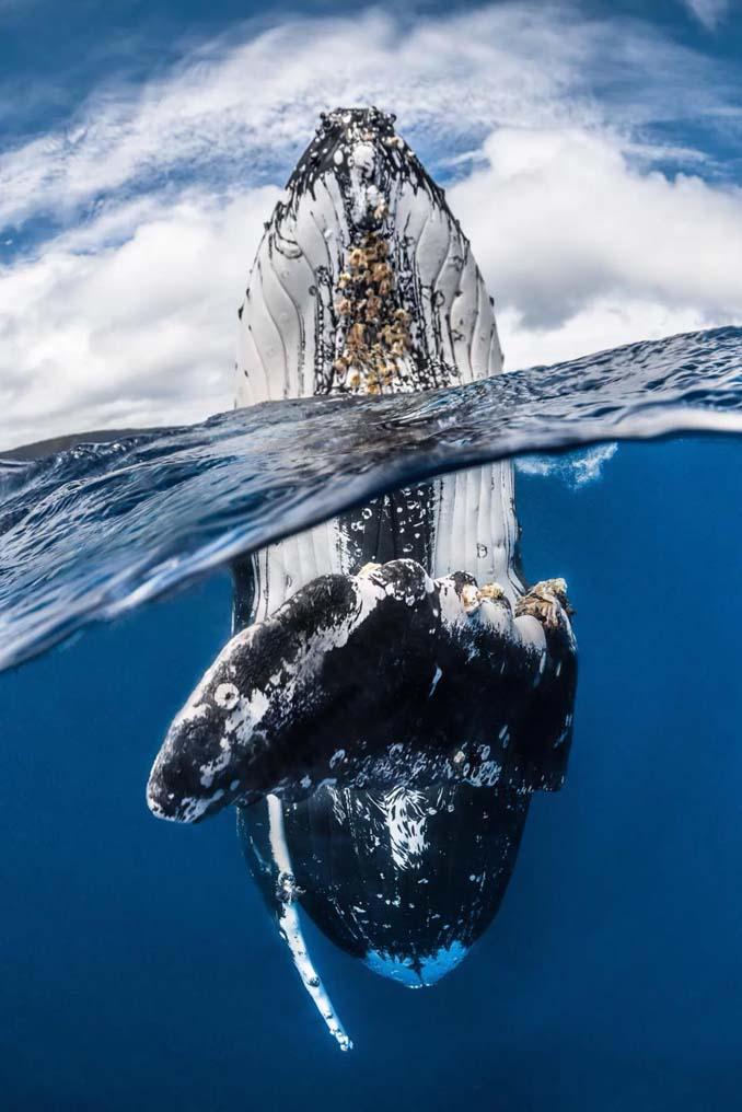Εντυπωσιακές φωτογραφίες από τον διαγωνισμό UK Underwater Photographer of the Year 2018 (4)
