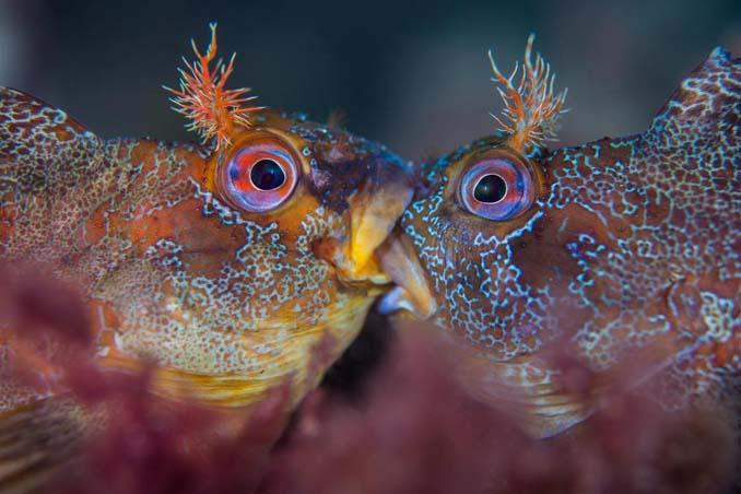 Εντυπωσιακές φωτογραφίες από τον διαγωνισμό UK Underwater Photographer of the Year 2018 (5)