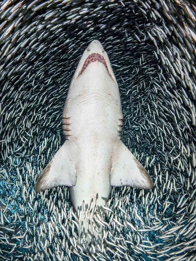 Εντυπωσιακές φωτογραφίες από τον διαγωνισμό UK Underwater Photographer of the Year 2018 (9)