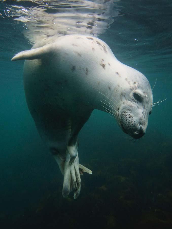 Εντυπωσιακές φωτογραφίες από τον διαγωνισμό UK Underwater Photographer of the Year 2018 (12)