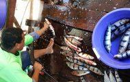 Ένας αλλιώτικος τρόπος για να καθαρίσεις ψάρια