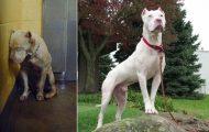 Φωτογραφίες σκύλων πριν και μετά την υιοθεσία που θα σας κάνουν να λιώσετε (1)