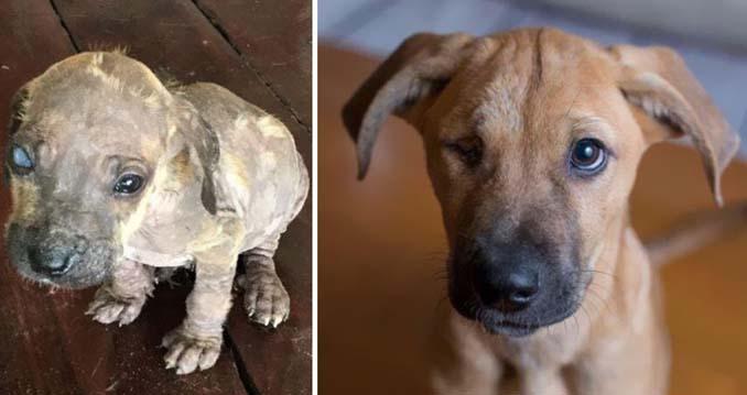 Φωτογραφίες σκύλων πριν και μετά την υιοθεσία που θα σας κάνουν να λιώσετε (2)