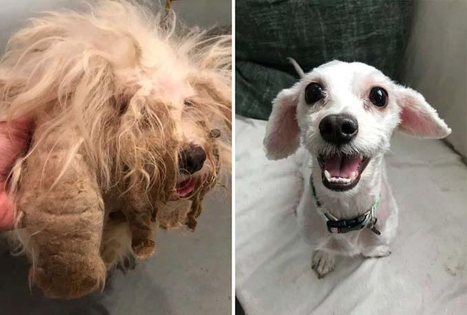 Φωτογραφίες σκύλων πριν και μετά την υιοθεσία που θα σας κάνουν να λιώσετε (5)