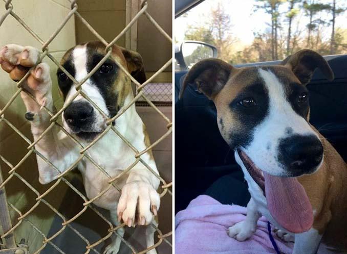 Φωτογραφίες σκύλων πριν και μετά την υιοθεσία που θα σας κάνουν να λιώσετε (6)