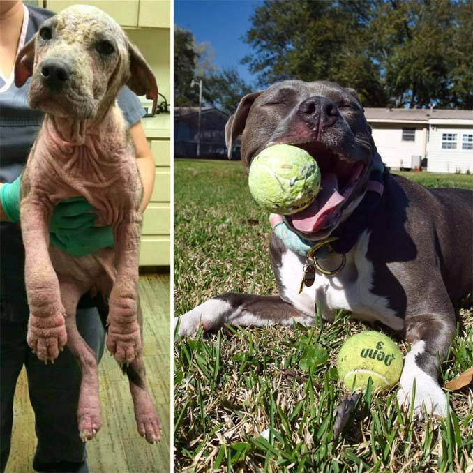 Φωτογραφίες σκύλων πριν και μετά την υιοθεσία που θα σας κάνουν να λιώσετε (7)