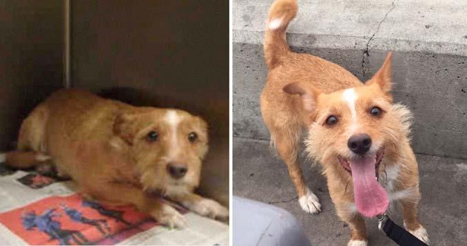 Φωτογραφίες σκύλων πριν και μετά την υιοθεσία που θα σας κάνουν να λιώσετε (8)