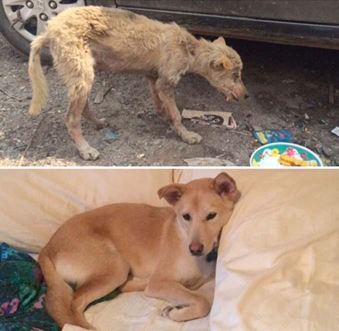 Φωτογραφίες σκύλων πριν και μετά την υιοθεσία που θα σας κάνουν να λιώσετε (9)