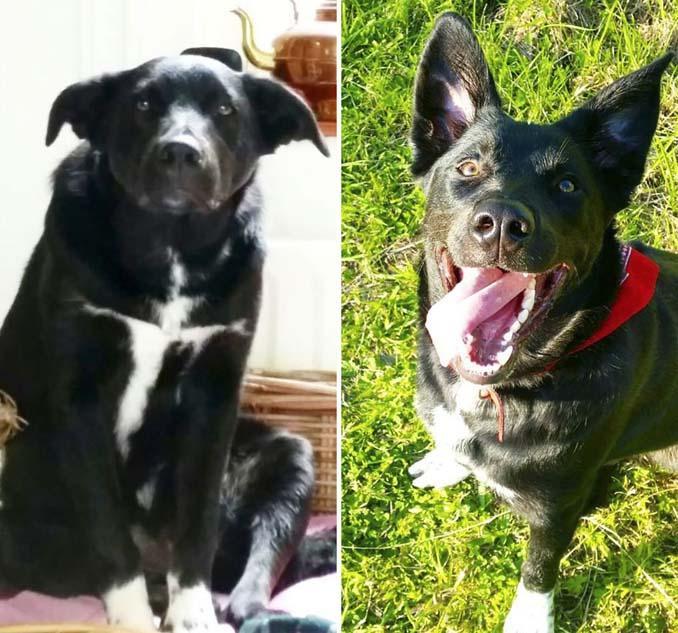 Φωτογραφίες σκύλων πριν και μετά την υιοθεσία που θα σας κάνουν να λιώσετε (10)
