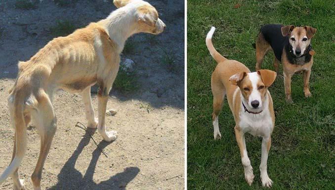 Φωτογραφίες σκύλων πριν και μετά την υιοθεσία που θα σας κάνουν να λιώσετε (13)