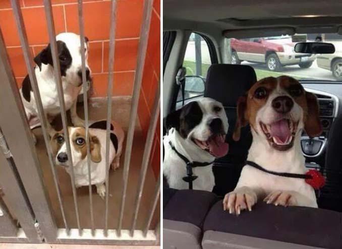 Φωτογραφίες σκύλων πριν και μετά την υιοθεσία που θα σας κάνουν να λιώσετε (16)