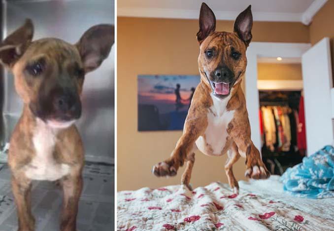 Φωτογραφίες σκύλων πριν και μετά την υιοθεσία που θα σας κάνουν να λιώσετε (17)
