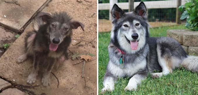 Φωτογραφίες σκύλων πριν και μετά την υιοθεσία που θα σας κάνουν να λιώσετε (18)