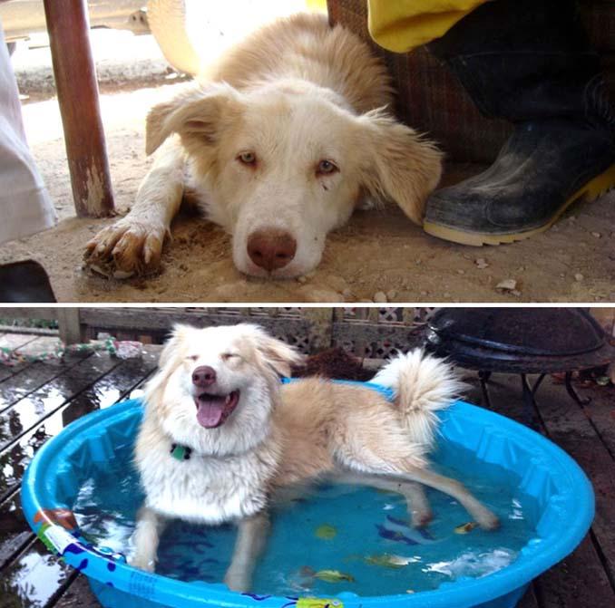 Φωτογραφίες σκύλων πριν και μετά την υιοθεσία που θα σας κάνουν να λιώσετε (19)