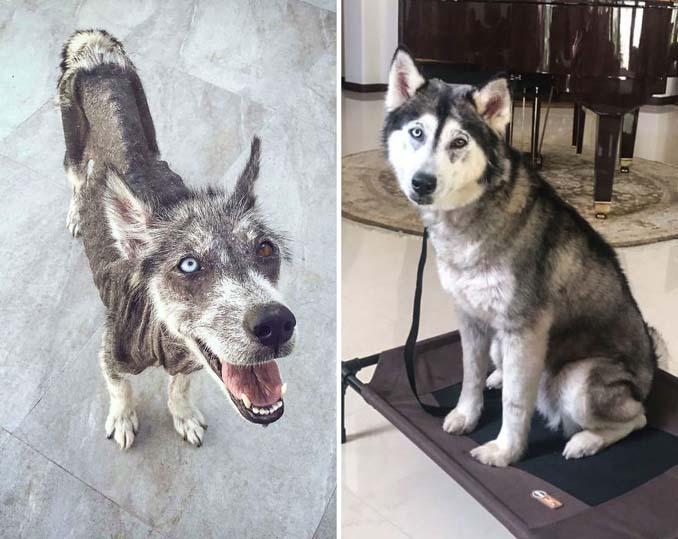 Φωτογραφίες σκύλων πριν και μετά την υιοθεσία που θα σας κάνουν να λιώσετε (20)
