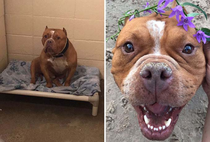 Φωτογραφίες σκύλων πριν και μετά την υιοθεσία που θα σας κάνουν να λιώσετε (21)