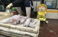 Γάτα που πουλάει ψάρια στο Βιετνάμ έγινε η νέα σταρ του Internet (1)