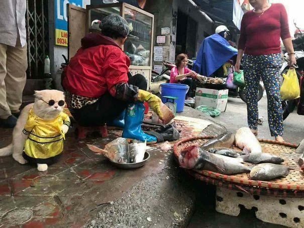 Γάτα που πουλάει ψάρια στο Βιετνάμ έγινε η νέα σταρ του Internet (2)