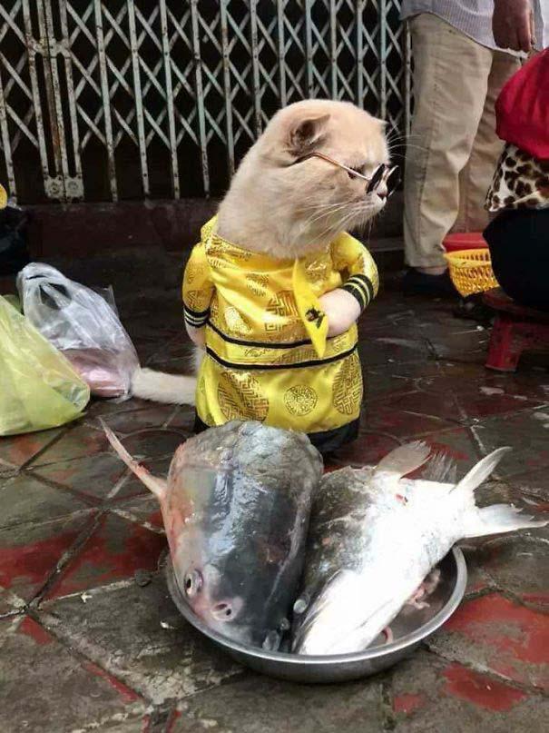 Γάτα που πουλάει ψάρια στο Βιετνάμ έγινε η νέα σταρ του Internet (3)