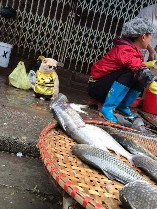 Γάτα που πουλάει ψάρια στο Βιετνάμ έγινε η νέα σταρ του Internet (4)