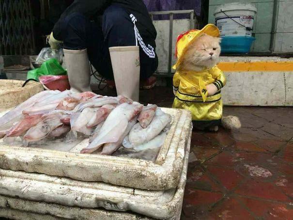 Γάτα που πουλάει ψάρια στο Βιετνάμ έγινε η νέα σταρ του Internet (5)