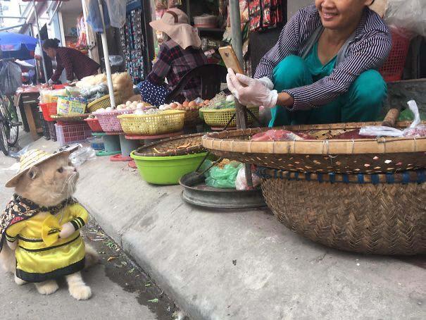 Γάτα που πουλάει ψάρια στο Βιετνάμ έγινε η νέα σταρ του Internet (6)