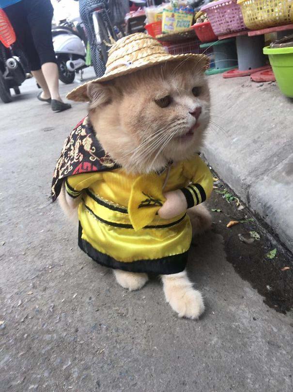Γάτα που πουλάει ψάρια στο Βιετνάμ έγινε η νέα σταρ του Internet (7)