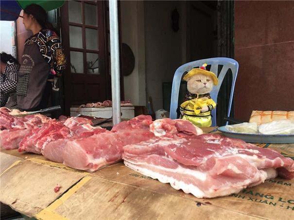 Γάτα που πουλάει ψάρια στο Βιετνάμ έγινε η νέα σταρ του Internet (8)