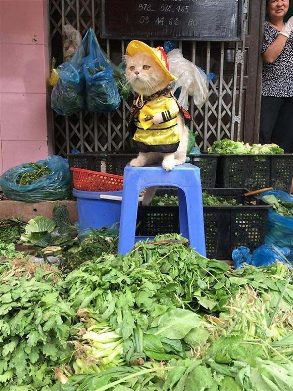 Γάτα που πουλάει ψάρια στο Βιετνάμ έγινε η νέα σταρ του Internet (9)