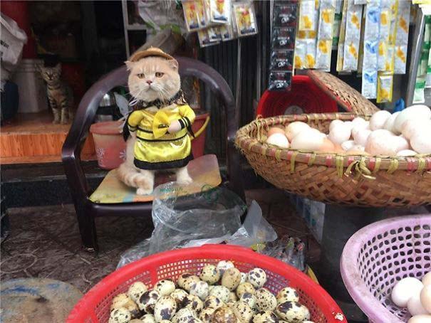 Γάτα που πουλάει ψάρια στο Βιετνάμ έγινε η νέα σταρ του Internet (10)