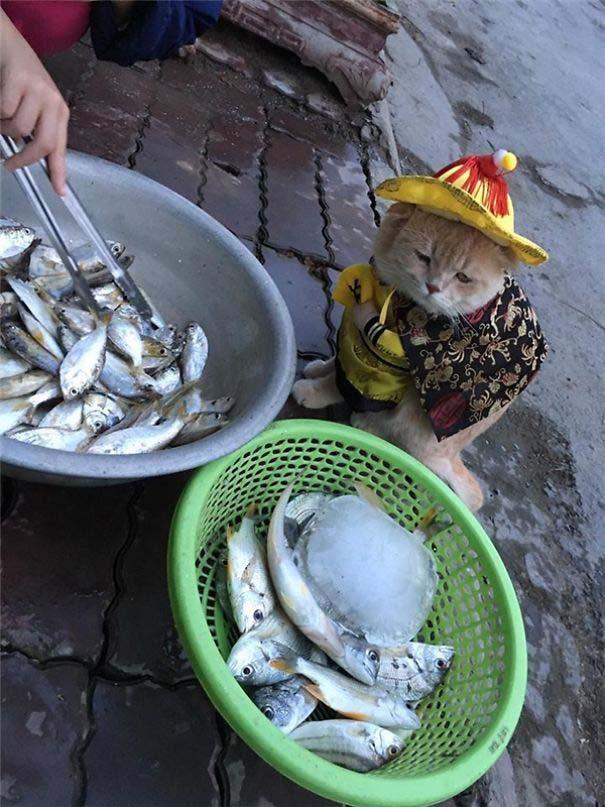 Γάτα που πουλάει ψάρια στο Βιετνάμ έγινε η νέα σταρ του Internet (11)