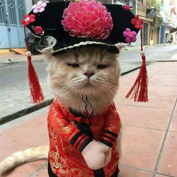 Γάτα που πουλάει ψάρια στο Βιετνάμ έγινε η νέα σταρ του Internet (12)