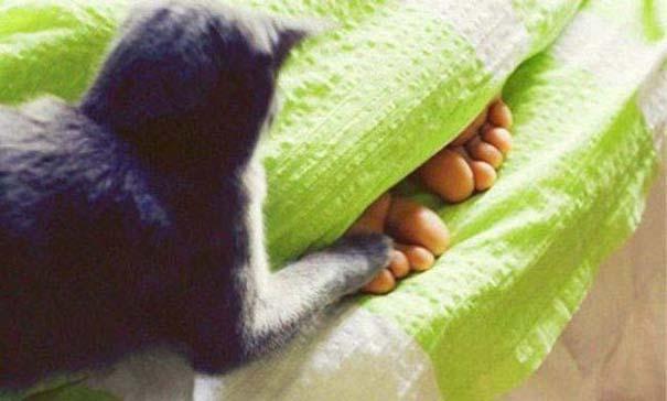 Γάτες που... κάνουν τα δικά τους! #84 (10)