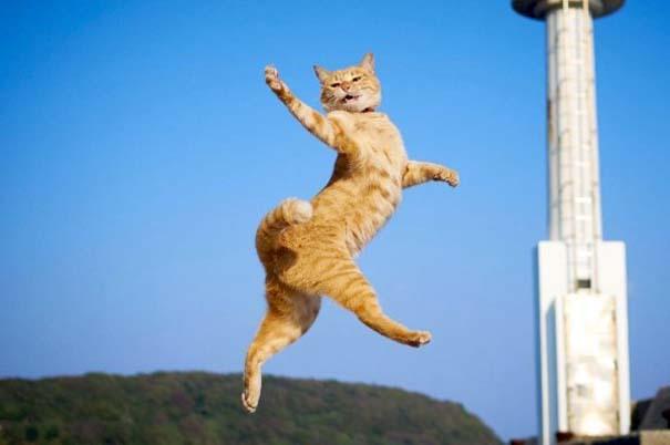 Γάτες που... κάνουν τα δικά τους! #84 (9)