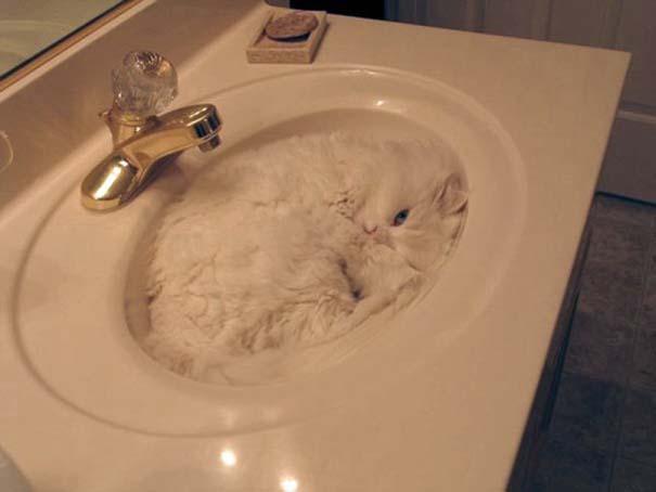 Γάτες που... κάνουν τα δικά τους! #84 (8)