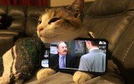 Γάτες που... κάνουν τα δικά τους! #84 (1)