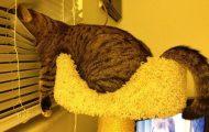 Γάτες που... κάνουν τα δικά τους! #85 (1)