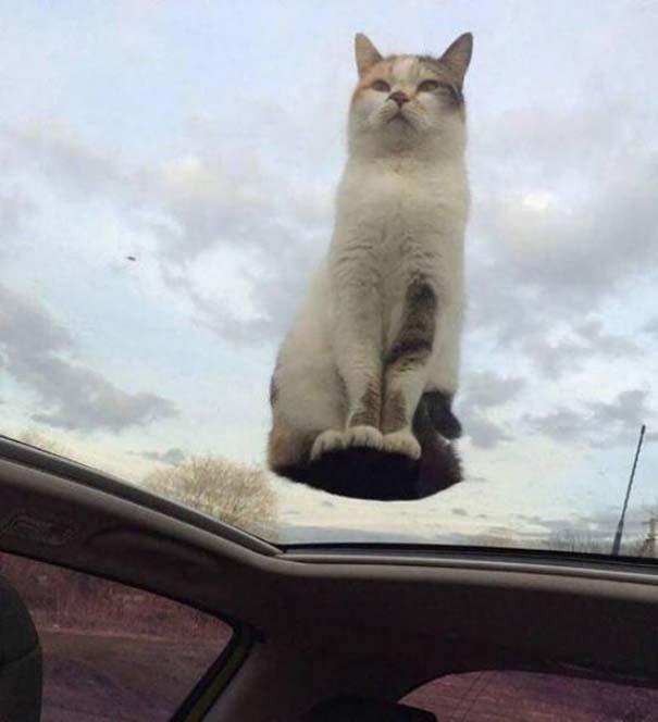 Γάτες που... κάνουν τα δικά τους! #84 (7)