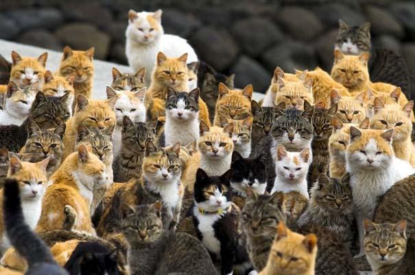 Γάτες που... κάνουν τα δικά τους! #84 (5)