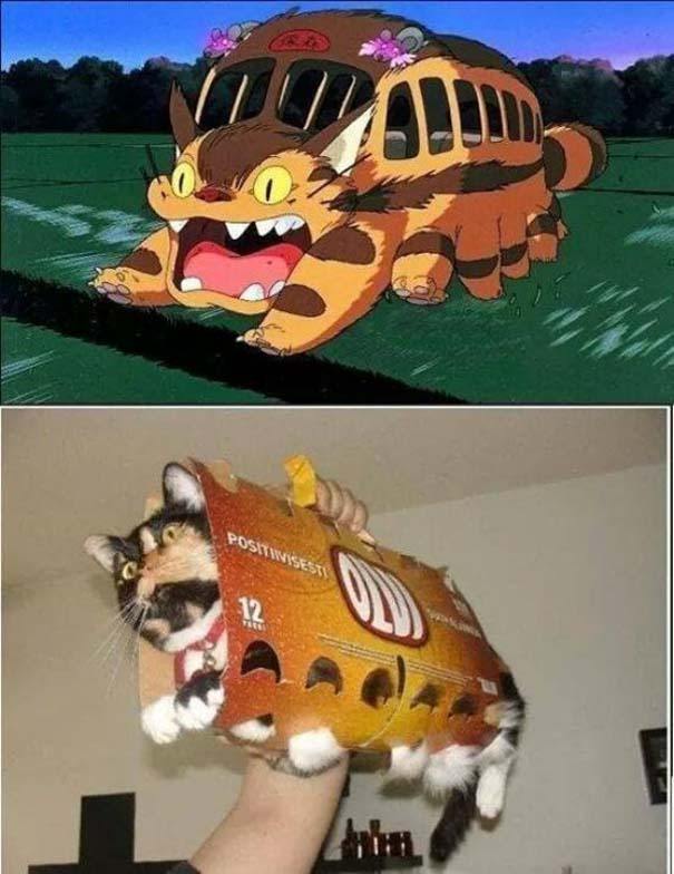 Γάτες που... κάνουν τα δικά τους! #84 (2)