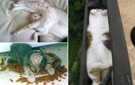 Γάτες που δεν την παλεύουν καθόλου (10)
