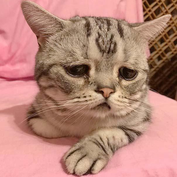 Luhu, ίσως η πιο λυπημένη γάτα στον κόσμο (1)