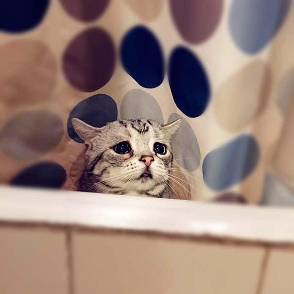 Luhu, ίσως η πιο λυπημένη γάτα στον κόσμο (3)