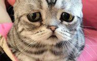 Luhu, ίσως η πιο λυπημένη γάτα στον κόσμο (5)
