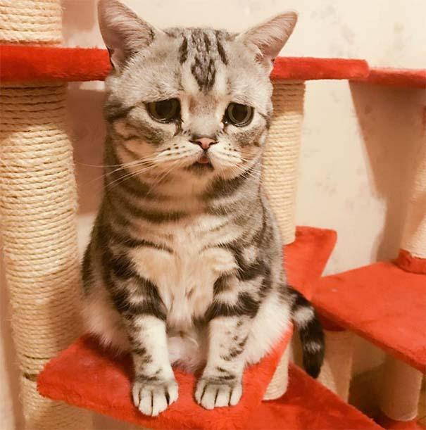Luhu, ίσως η πιο λυπημένη γάτα στον κόσμο (10)