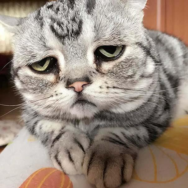 Luhu, ίσως η πιο λυπημένη γάτα στον κόσμο (11)